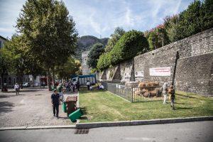 FIera_Zootecnica_Como_Porta_Torre-7569