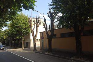 Viale Masia - potatura alberi1
