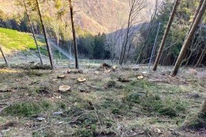 alberi bisbino (8)