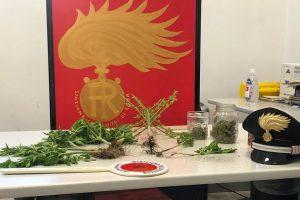 carabinieri erba marijuana