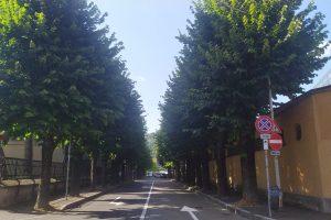 stadio viale masia alberi